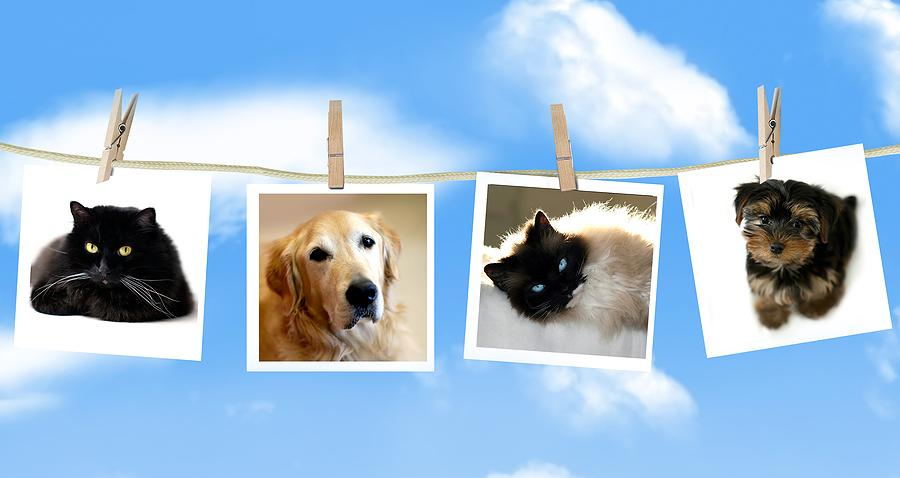 pictures of dogs and cats that passed away